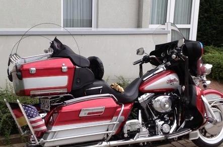Harley-Davidson Electra.jpeg